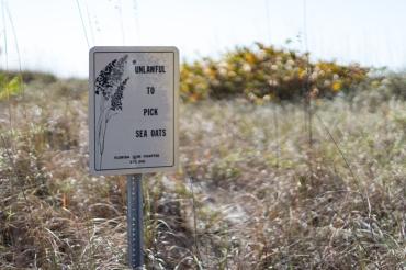 Unlawful to Pick Sea Oats