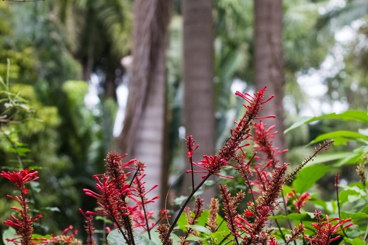 Sunken Gardens-11